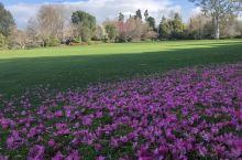 绿草与红花共舞,晚霞与蓝天媲美!
