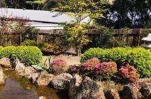 卢拉小镇上偶遇的私人日式庭院 这个花园是在卢拉小镇上拍晚樱视频的时候 当地的一位老太太邀请我们去她家