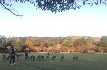 日本之神鹿公园