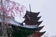 一生至少要去一次的神社—日本三景之一的宫岛严岛神社,有在海上朱红色大鸟居,这是通往天空的大门,是从人