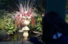 布查特花园的灯展超赞呢!虽然是冬天,花朵凋零了,但是看到美丽的灯展还是很开心!建议夏天或冬天去,可以