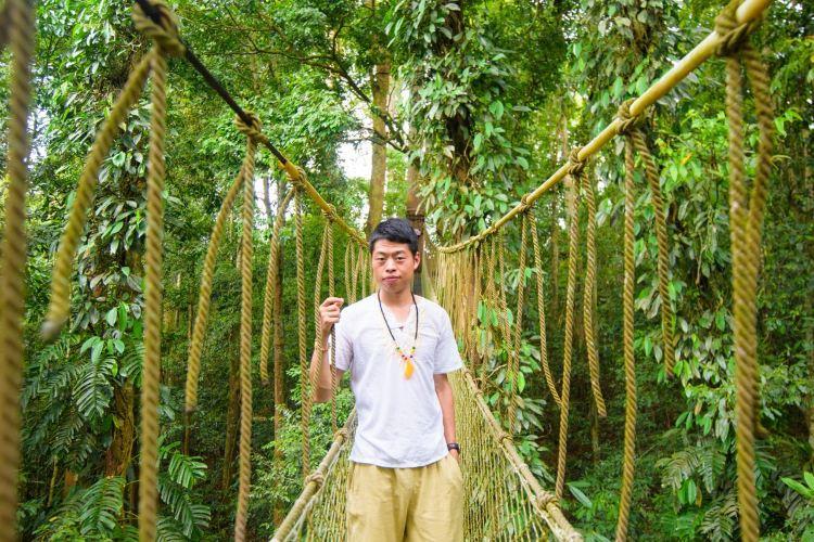 Xishuangbanna Tropical Rainforest Nature Reserve2