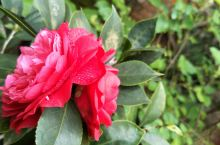 再来一波漂亮的花花