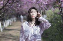 春天在哪里?圆通山的花潮等着你! 地点:云南省昆明市圆通山动物园 :下午四点左右拍摄,光线柔和有层次