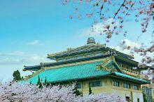 武汉 东湖磨山樱花园建于1998年,园区占地310亩,拥有樱花种类五十余种,所植樱花树万余株。  东