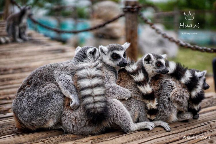 지난 야생동물원(제남 야생동물세계)3