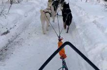 第一次带小盆友坐狗拉雪橇,从声音听出她还是有点害怕的,说喜欢都很勉强,哈哈但是森林里的雪景太美了,以