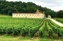 感受一下纯天然种植正宗的美味之酒   圣埃美隆酒庄是以葡萄酒为主的。我跟我的朋友们一起来到了这里,可