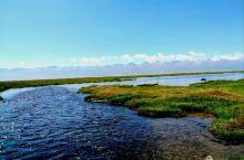 天鹅湖 位于天山脚下,面积约300多平方公里,每到春天冰雪消融,万物复苏,大批天鹅从印度和非洲南部成