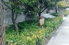 这个是花洲书院后院的园林处,布局合理,环境优美,