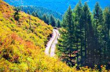 秋收获得季节!秋彩色的世界!秋的万龙摄影的天堂!