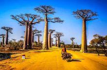 非洲穆隆达瓦,猴面包树的故乡,体验原汁原味马岛生活。 如果地球有诺亚方舟,马达加斯加就是其中之一。马