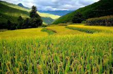 #秋之美# 看,香格里拉青稞地间的又一丰年~  有人说,上帝是公平的,给他打开一扇门的同时也会为他