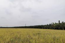弄岛 弄岛位于瑞丽西南方向中缅边境中国一侧,与缅北南坎、八莫隔江相望。弄岛并非一个岛,而是傣语发音,