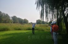 美芦高尔夫球场芦苇荡很多,球道草太软,球打在球道里一点都不滚