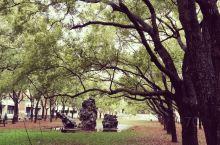中正纪念堂隔壁的思恩园,绿树葱葱,雨后很优美。不过就是太放松警惕了,木有留意脚下——雨后思恩园地面超