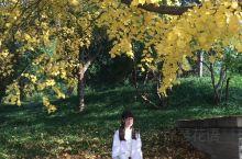 北海公园之秋 《不第后赋菊》唐·黄巢 待到秋来九月八,我花开后百花杀。 冲天香阵透长安,满城尽带黄金