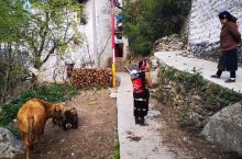 巴底乡美人谷 藏寨之春