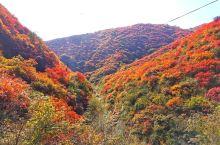 紫家峪的秋天