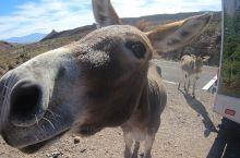 奥特曼小镇。这里的特色就是野驴!沿途有不少野驴,如果运气好的话你找个地方停车休息的时候,野驴们就会过