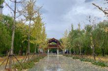 秋风秋雨后的野鸭湖湿地公园景色之二