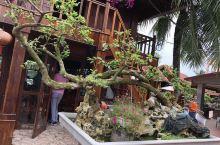 海防评价最好的越南餐厅之一,餐厅主要吃海鲜,没有肉类,非常奇怪!