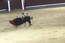 我这个在家里看到杀鸡都要躲得远远的人,这次在西班牙国庆第二天,鬼使神差地看了一场斗牛。马德里容纳3万