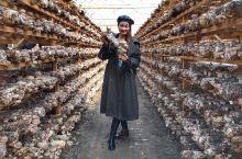 中国香菇第一乡:丽水庆元 庆元作为中国香菇第一乡,在庆元香菇市场看完各种各样的香菇制品后自然要来香菇