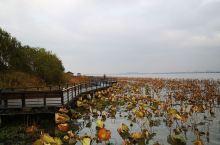 阳澄湖  又是一年吃蟹季,约上三五好友,带上家人,去阳澄湖吃大闸蟹,顺便坐船去阳澄湖的岛上逛逛。大闸