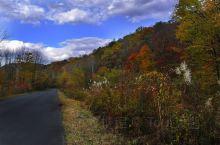 秋天的白桦林层林尽染,黄色的树叶像翩翩起舞的黄蝶,秋天的白桦林多姿多彩,它是用秋天这调色盘,调出那一