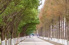 深秋,驾车沿崇明草港公路行驶,沿途所见皆是美丽的自然景观,如同置身画卷之中。