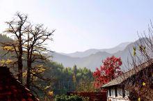 指南村位于临安东天目山麓,海拔550米,山的左右两侧有梯田,蔚蔚壮观。 村的周围古树参天,这个季节既
