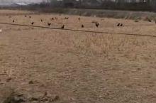 崇明农场纯放养模式养殖基地