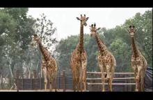 这是太湖龙之梦动物园 景色很美