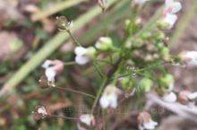 公园里的小花与桃花含苞欲放! 磁县·邯郸