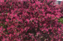 疫情过去了,火红的鲜花怒放,美好的生活开始