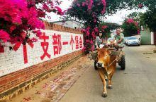 黄牛哥我们走,到中国大陆最南端刷墙去!