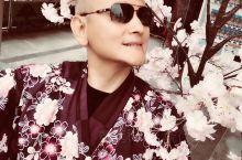 【环球游记:鹿儿岛赏樱花】   日本的樱花开了 雪の桜  (位置)(位置)(位置)日本樱花开放时间一