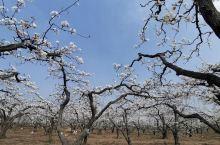 春游浩荡,是年年、寒食梨花时节。白锦无纹香烂漫,玉树琼葩堆雪。静夜沉沉,浮光霭霭,冷浸溶溶月。人间天