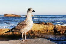 第一次近距离地接近海鸥,这样不避不躲,这样坦然,真是不多见。 在索维拉,海港门,《权力的游戏》取景地