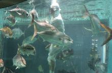 到日本三重县伊勢市,看海洋生物的美轮美奂,感受海女的生活方式,拜访峰会召开胜地的美景,精致生活。