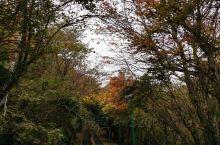 别府鹤见山缆车,俯瞰别府。秋天山里的景致不错。做为日本温泉圣地之一,一定要感受下地狱等各类温泉。地狱
