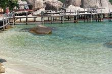 泰国唯一一座私人拥有的岛屿南园岛。原生态的景观,人字型沙滩,海水,清澈见底,塑料瓶塑料袋沙滩袜等都不