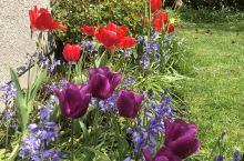 杂乱的花丛