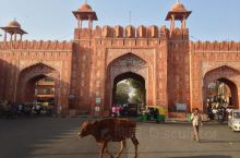 Jaipur Street festival 街头巷尾