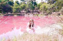 超美!墨尔本媲美粉糊的梦幻公园 Perth梦幻的赫利尔粉湖将人带入童话世界,而墨尔本市区的Westg