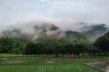 山色空蒙雨亦奇,稻田水满插秧时。