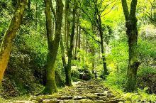 山林中命运多舛的寺庙——槇尾山施福寺 一直都非常喜欢日本的神社和寺庙,因为有很多日本的寺庙都在山林中