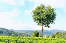 """普洱,好喜欢这座城市  普洱市原名""""思茅市"""",是""""茶马古道""""上的重要的驿站,著名的普洱茶的重要产地之"""