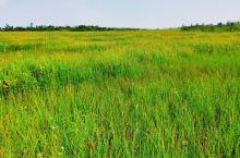 凤凰山空中花园,建议6月份来,这个季节花都凋谢了